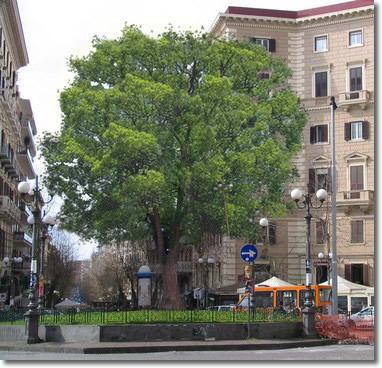 Comune di napoli il nuovo albero di piazza vanvitelli - Parcheggiano davanti casa cosa si puo fare ...