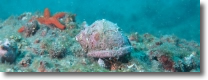 una foto del fondale marino
