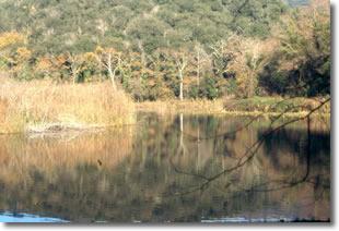 sponda di un lago ricoperta da rigogliosa alberatura