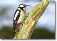 piccolo uccello sospeso su di un tronco d'albero