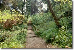 sentiero boschivo immerso in una rigogliosa vegetazione