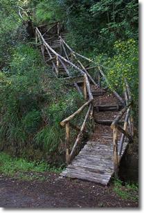 sentiero in legno immerso in un ambiente boschivo