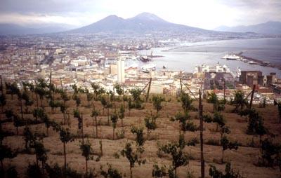 le piante di vite davanti al panorama della città con il golfo e il vesuvio