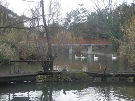 Angolo del laghetto centrale